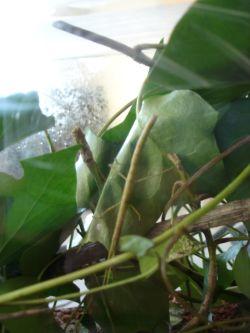 Suchbild: Wer sieht das getarnte Insekt?